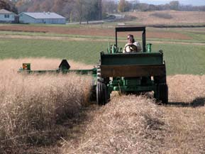 harvesting switchgrass
