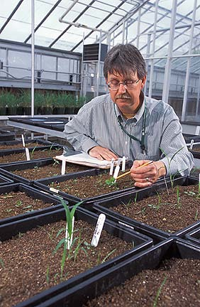 recording seedlings in the greenhouse