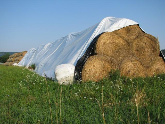 harvested bedding