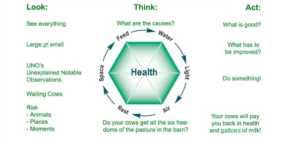 cow health diagram